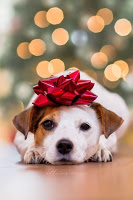 Manners Monday – Petiquette: 8 Tips for Civilizing your Furry Friend at Holiday Time & Beyond